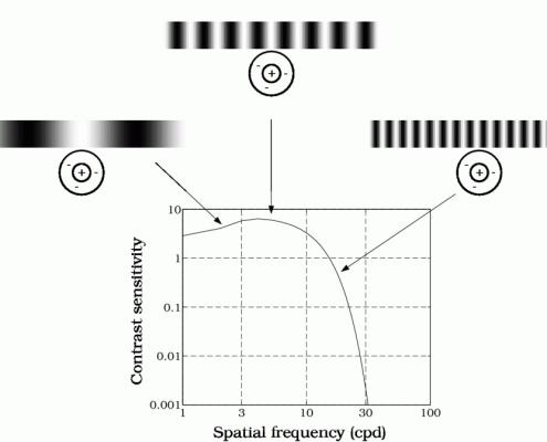 Contrast_Sensitivity_vs._Spacial_Frequency-